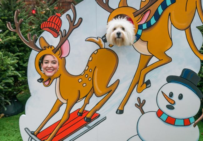 10th Dog of Christmas – @CodyCuddleBug