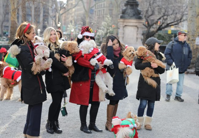 12 Dogs of Christmas (Santa Paws)